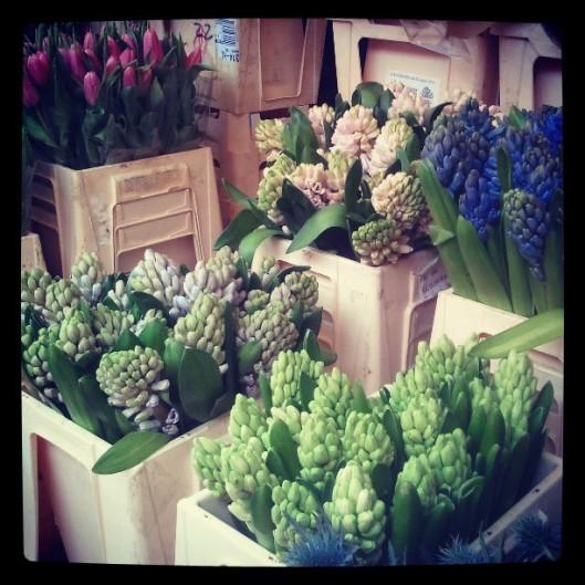 Cet hiver rigoureux et long a au moins l'avantage de prolonger les hyacinthes...