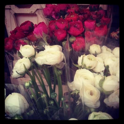 Blanche, roses ou rouges, les renoncules règnent...