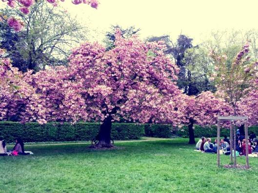Au commencement, étaient l'arbre et les fleurs...